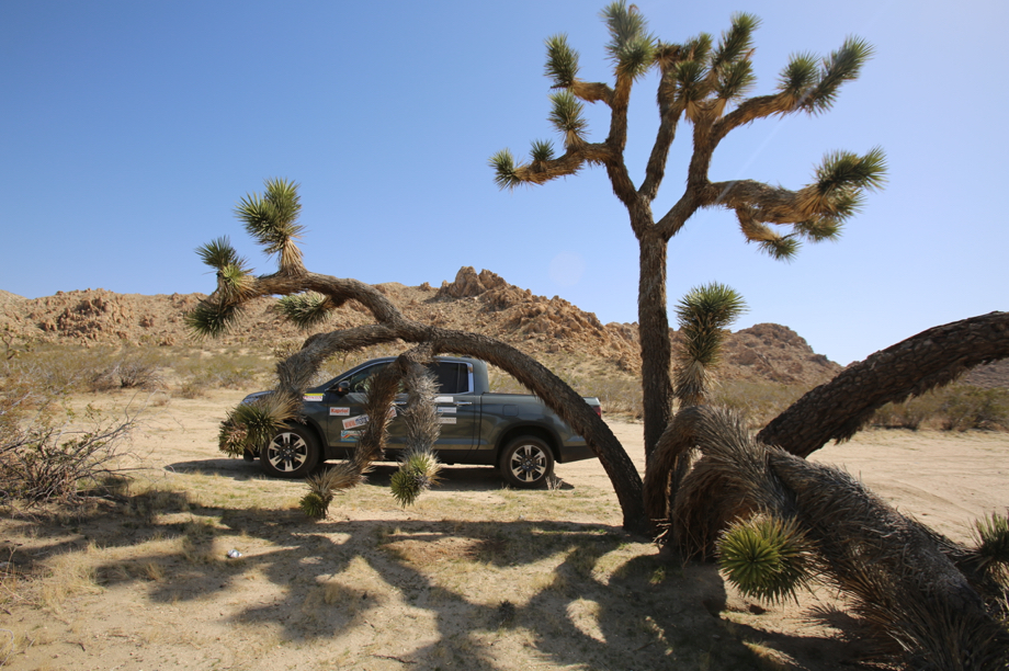 Joshua Tree Lancaster California